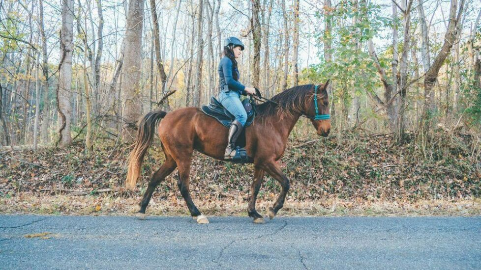 Gaited horse ridden in a Freeform Scout Treeless Saddle in the country.