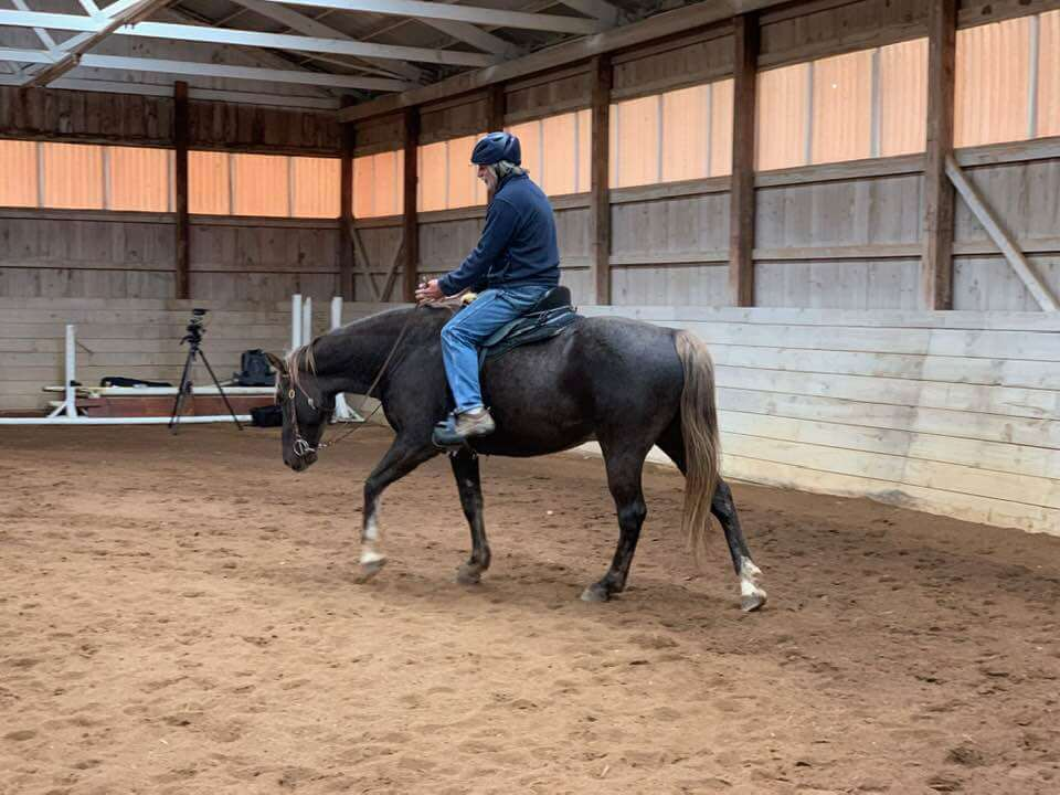 Gaited horse doing head down exercise in an Ivy Schexnayder clinic