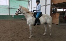 Horse and rider using a Freeform Ultimate Trail Treeless Saddle